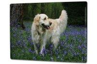 Tin Sign XXL Dog Golden Retriever bitch Blumenfeld