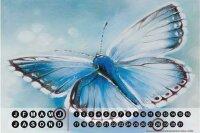 Perpetual Calendar Butterfly Species Warminski blue Tin...