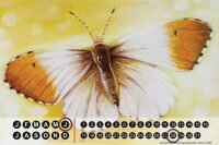 Perpetual Calendar Butterfly Warminski beige brown Tin...