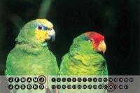 Perpetual Calendar Bird G. Huber Parrot Tin Metal Magnetic