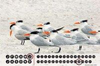 Perpetual Calendar Bird G. Huber Gulls Tin Metal Magnetic