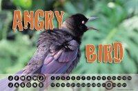 Perpetual Calendar Bird Species G. Huber Blackbird Tin...