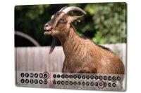 Perpetual Calendar rative Vet Practice Krakowski Goat Tin...