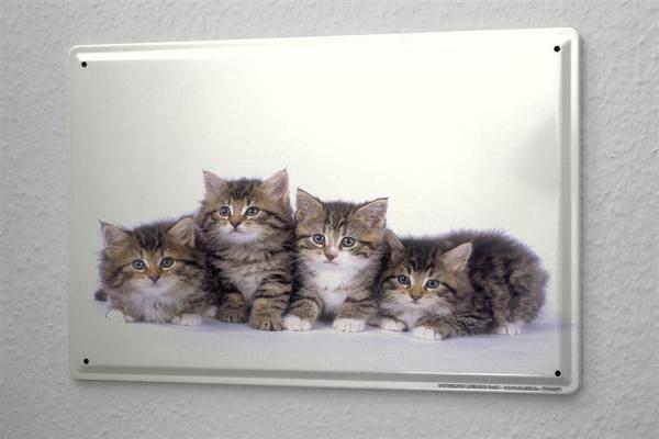 Blechschild Tierarzt Praxis Deko Katze