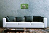 Blechschild Hunde Deko Welpen blaue Augen Wiese Metall Deko Wand Schild 20X30 cm