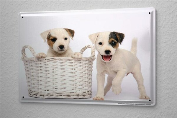 """Tin Sign Dog Decoration Puppy Jack Russell Terrier Metal Plate 8X12"""""""