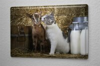 Tin Sign Nursery Decoration Cat and lamb Metal Plate...
