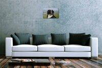 Blechschild Hunde Rasse Berner Sennenhund  Metallschild 20X30 cm