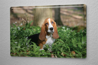 Tin Sign Pin Up Adult Art Beagle flowerbed 8X12