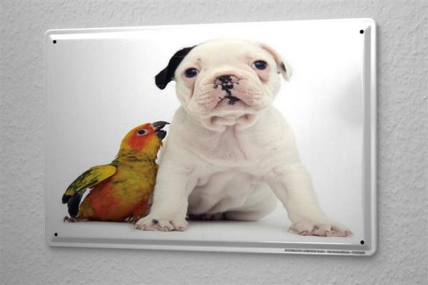 Blechschild Hunde Deko Albino Welpe Papagei Metall Deko Wand Schild 2