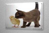 Tin Sign Kitchen Decor Puppy kitten chick 8X12""