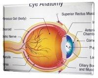 Tin Sign XXL Hospital eye