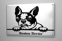 Tin Sign XXL Ravtive Vet Practice Boston Terrier Drawing